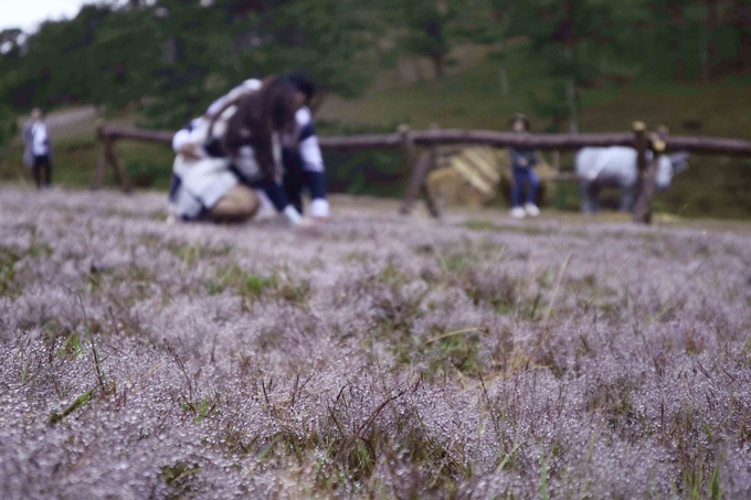 Đà Lạt vào mùa cỏ hồng ngày chớm đông