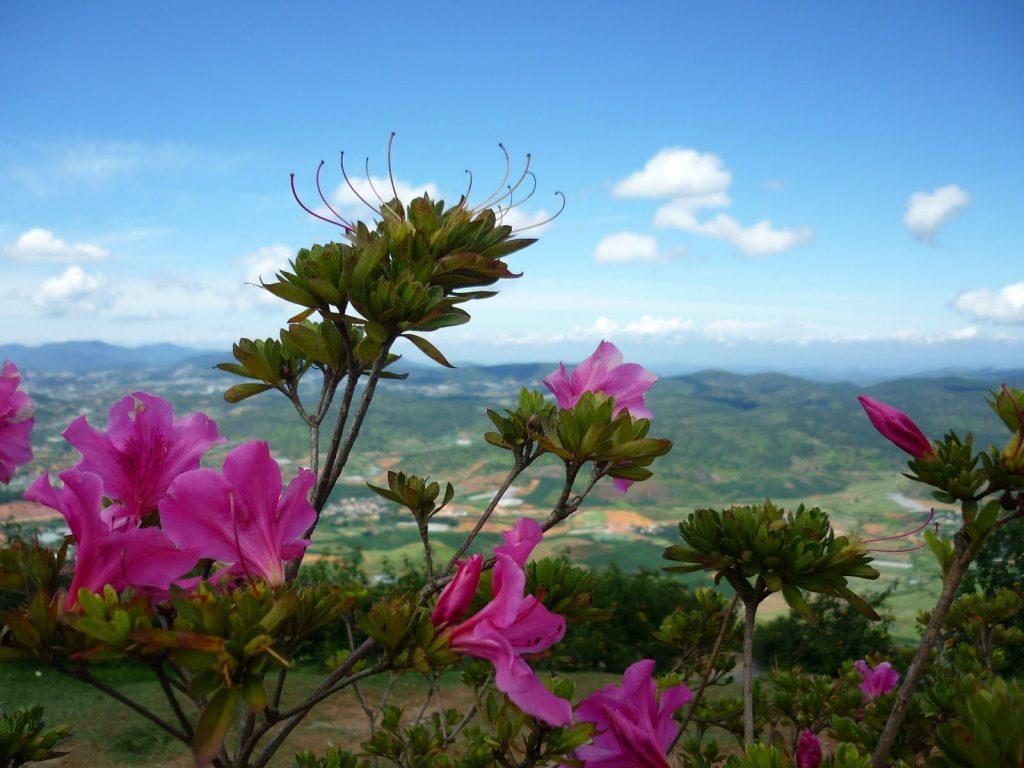 Đỉnh núi LangBiang cảnh đẹp khó quên - hinh 13