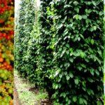 Vườn tiêu tại Phú Quốc – Du lịch sinh thái Phú Quốc