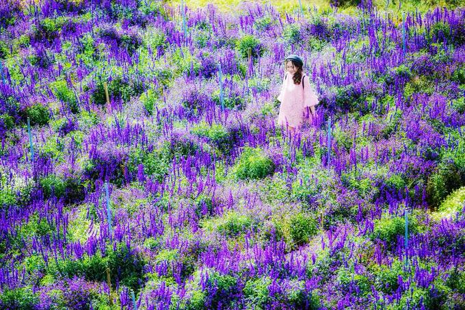 Cánh đồng hoa đẹp như trời Âu ở Đà Lạt - hinh 2